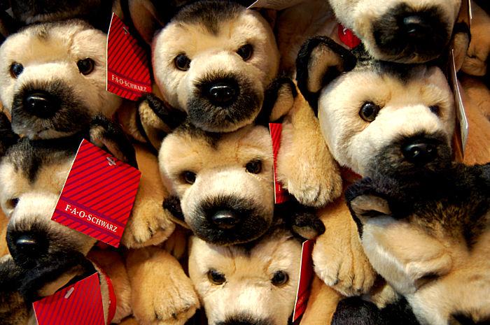 Staring Puppies