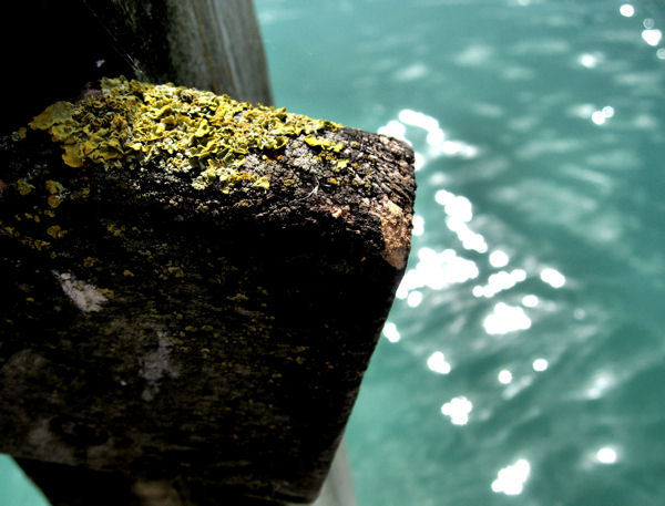 Kridtgraven