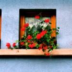 Windows in Breitenbach III